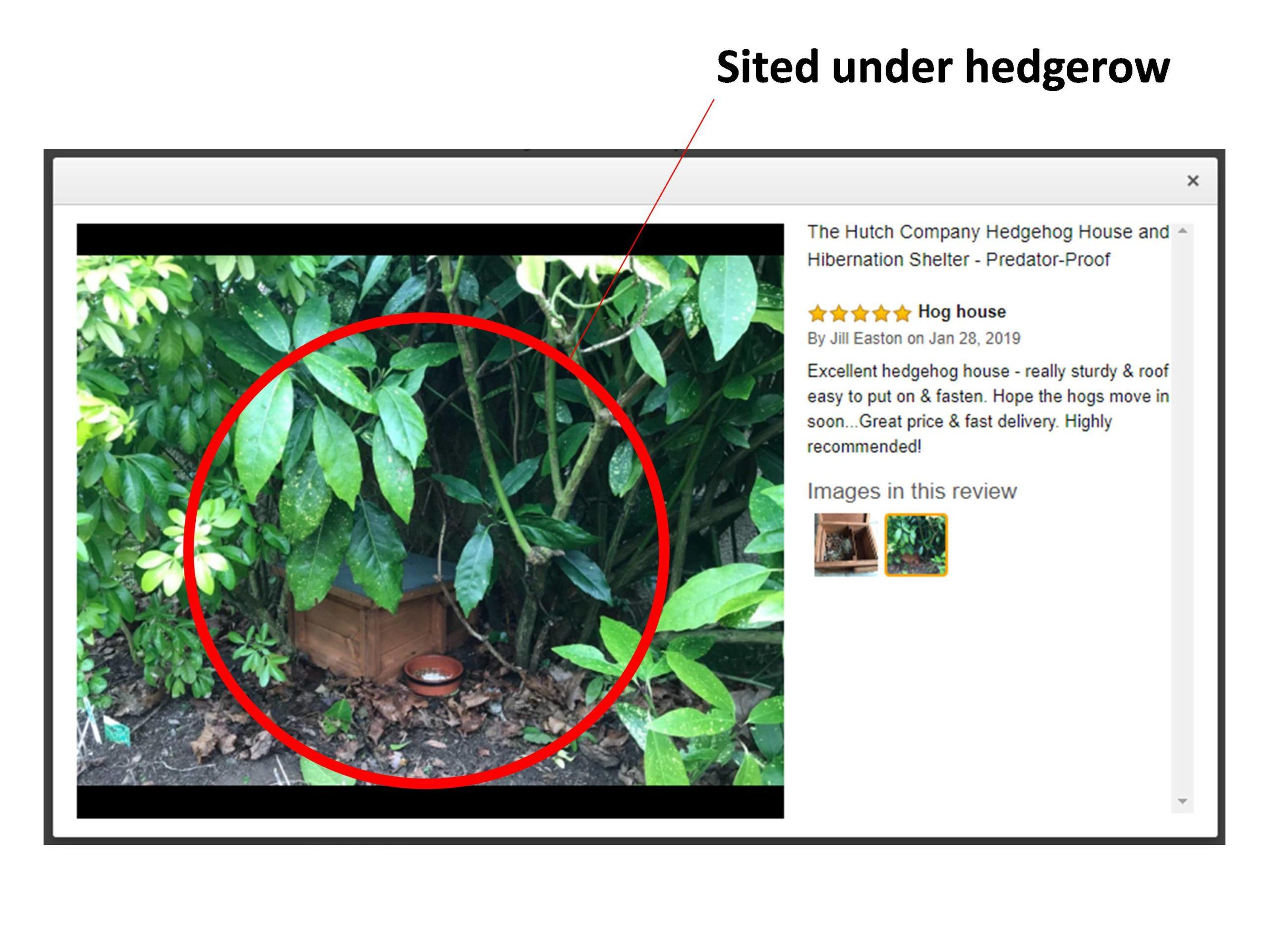Hutch Company Hedgehog House 2